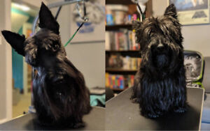 One-to-One Dog Grooming (Home based)