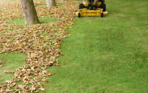 Fall Cleanup and Lawn maintains