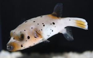 Aquagiant new fish arrived Jan.10. all fish 20% off this weekend