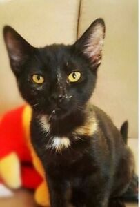 Victoria ~ available for adoption Wattle Grove Liverpool Area Preview