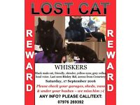 MISSING - *REWARD* - Black Cat - Top of the Town - Stroud
