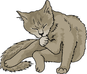 In Your Home Cat Grooming and Pet Nail Clipping