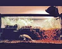 Wanted: 35-40 gallon turtle/fish tank
