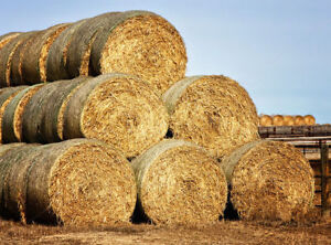 Looking for 4x5 round bales of hay