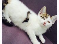 Female kitten 6 months old