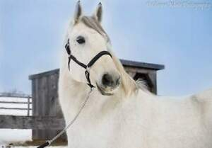 Horse for Part Board - Guelph