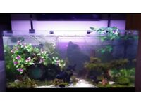 ****MODERN 3FT FISH TANK AQUARIUM****