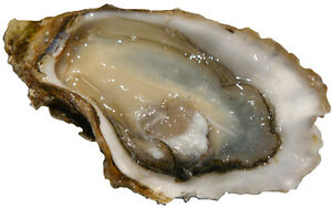 Oyster License