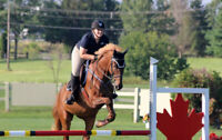 Riding Lessons Adults Children Saturday Horse Club