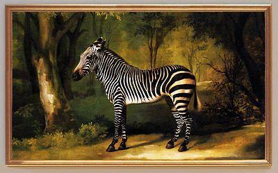 Maler George Stubbs  ZEBRA um 1763 auf Leinwand 19 im Goldrahmen