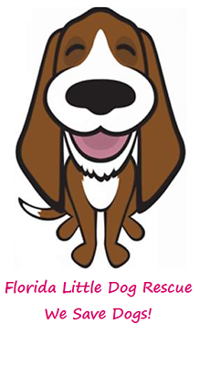 Florida Little Dog Rescue