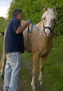 Horse Boarding Windsor Region Ontario image 2