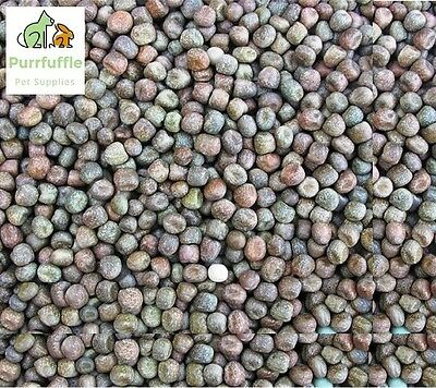 20KG MAPLE PEAS PIGEON FOOD / PARTICLE BAIT CARP CHUB TENCH BARBEL FISHING