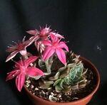 SucculentsWales