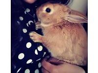 Tony The Bunny