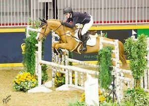 2 unbeatable versatile pony mares
