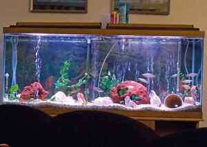 55 gallon tank and everything you need to get is going