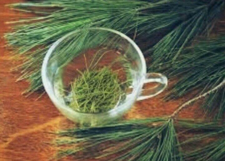Antioxidant Loose Leaf White Pine Needle Tea