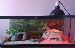 2 Female Leopard Geckos With Everything They Need