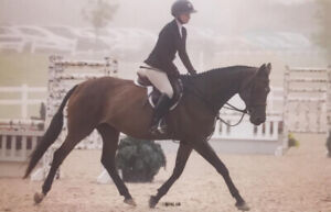 athletic 9 year old mare