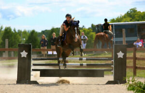 Jumper / Eventer for lease