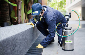 Pest Control in Vancouver for Bed Bugs, Rodents and Wildlife