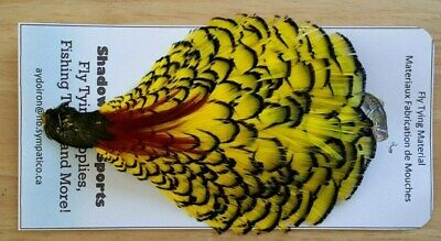 """Feather /"""" Lady Amherst  /""""  Craft Thread Floss Fly Fishing Flies Fly Tying"""