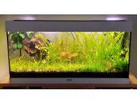 Aquarium 180 Juwel with fish and plants