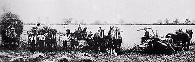 SUFFOLK ANCESTRY BARLEY HARVEST FENN FARM HITCHAM 1911 MINIATURE MOUNTED PRINT