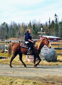 TRAIL HORSE FOR SALE!  Karma is a wonderful mare!