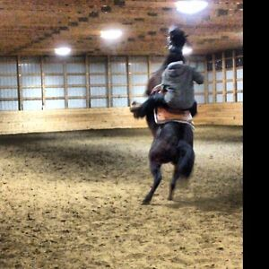 HORSE TRAINING, STARTING, OR PUTTING ON MILES