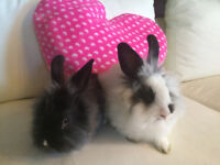 FREE YOUNG BUNNIES WITH CAGE & ACCESSORIES