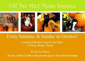 Fall Pet Mini Sessions