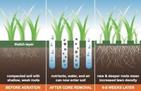 Aerating, Dethaching, Fertilizing, Weed Control, Lawn Care