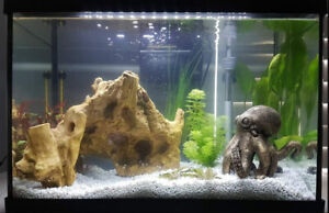 Aquarium / Fish Tank Cleaning & Maintenance Services