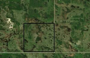 1/4 section of open crop land For Rent