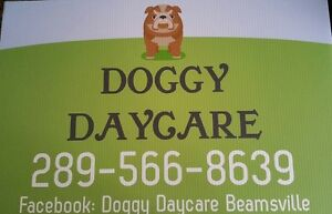 DOGGY DAYCARE - PET SITTER