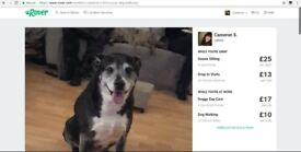Dog sitter and Dog Walker Available through Rover + Discount Code