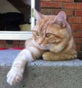 "KLAWS: LOST Hilliard/Marina Blvd area, Ptbo ""Clementine"" 1 y/o"
