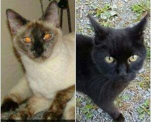 Cats for rehoming