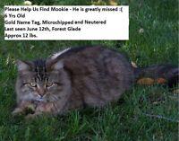 Have you seen Mookies?