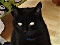 Missing Male Black Cat SS14 2PR