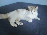 female cat for adoption by ca-r-ma Moncton