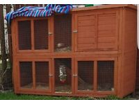 Two tier rabbit hutch and rabbit