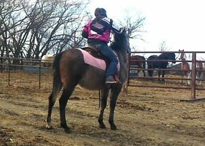 kids broke horse been there done that gelding