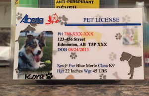 Pet Licence/ID Cards