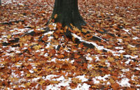 Leaf Removal West End Halifax $25 (Oxford, Quinpool,Chebucto)