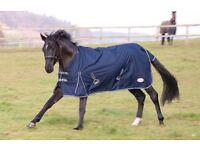 Outdoor Lightweight Standard Neck Horse Rug