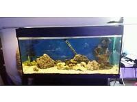 Marine tank live rocks and 1 big branch 1big rock up running just add fish