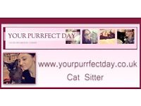 Registered Cat Sitter ( London) - Your Purrfect Day